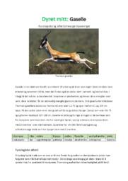 Dyret mitt: Gaselle | Biologi