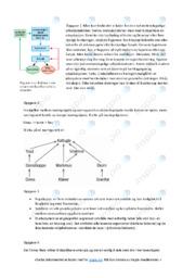Økologi | Oppgave | 6 i karakter