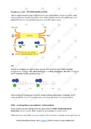 Energibærere i celler | Oppgave